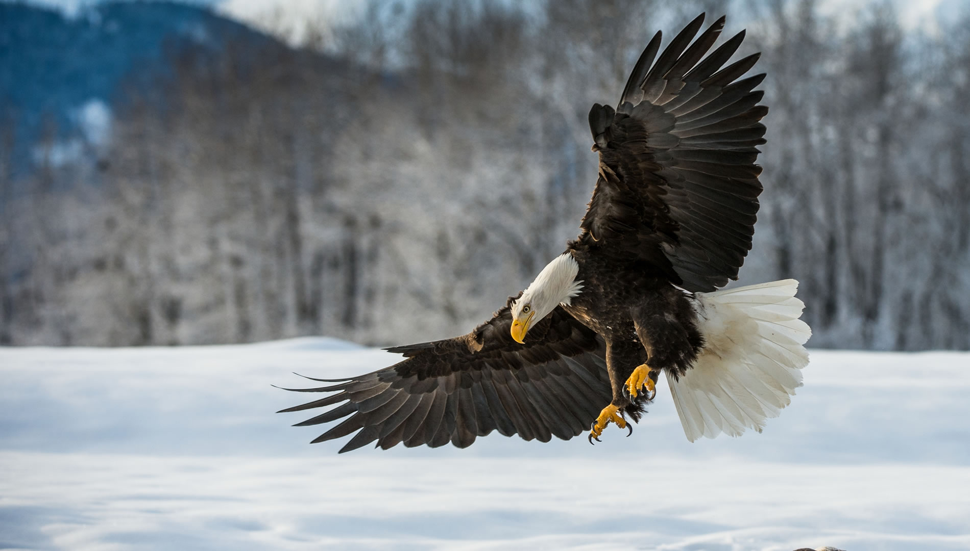 Slide-Eagle