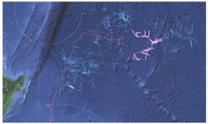 Tracks Using Rainier-S20