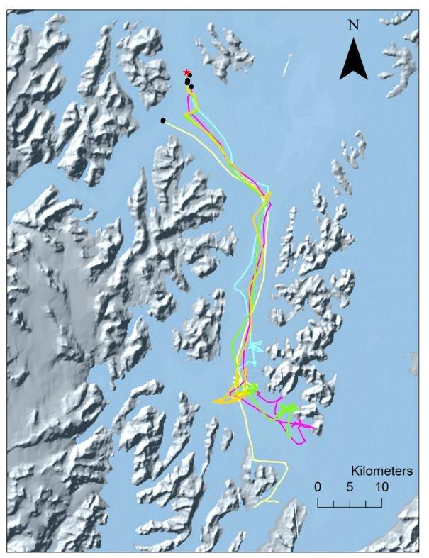 Improving emergence location estimates for Argos pop-up transmitters