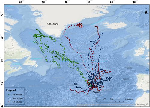 Environmental Drivers of Large‐scale Movements of Baleen Whales in the Mid‐North Atlantic Ocean