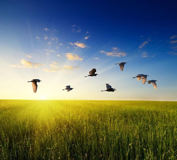 Birds and Grass