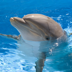 Cetacean Finmount