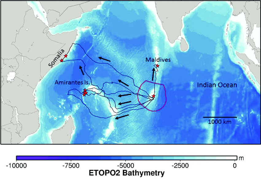 Satellite tracking studies show nesting site in Egypt is hub for adult green turtles of the Red Sea