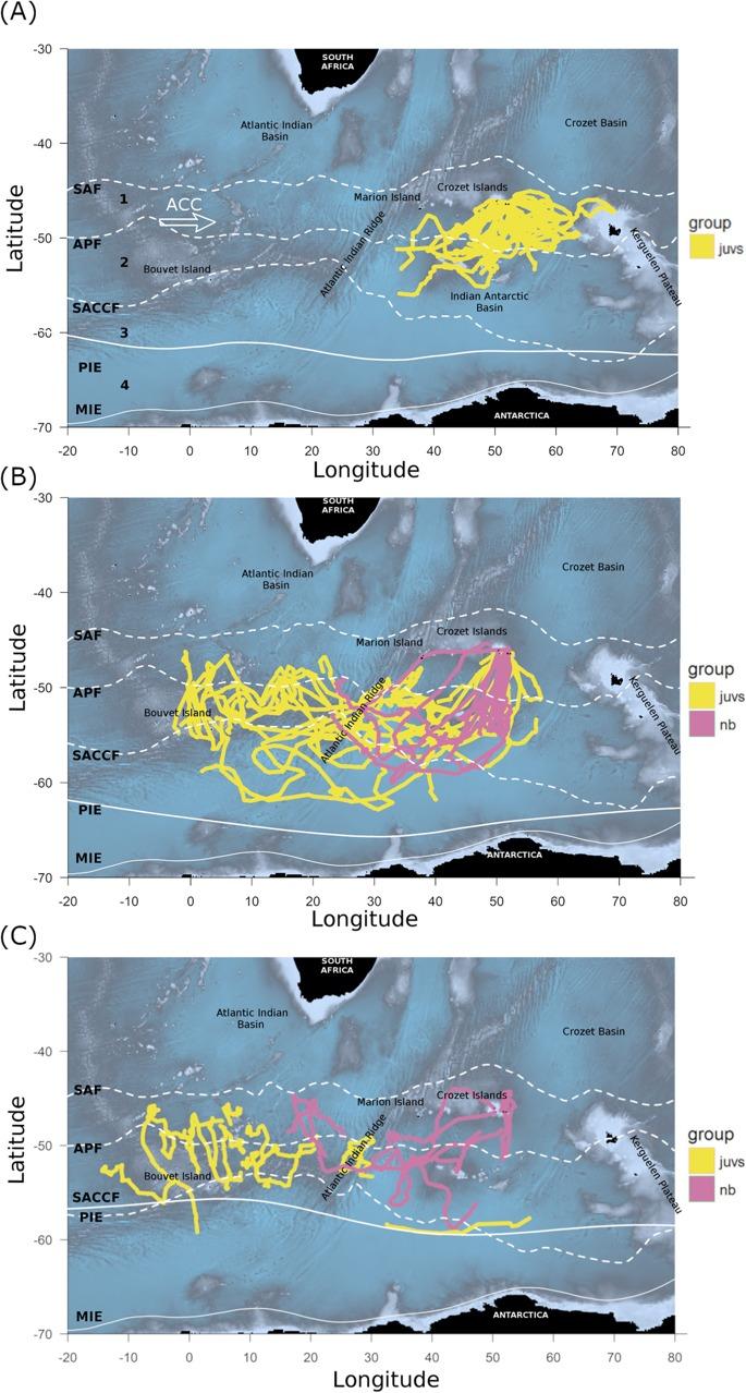 SPLASH Tags Tracking Penguins