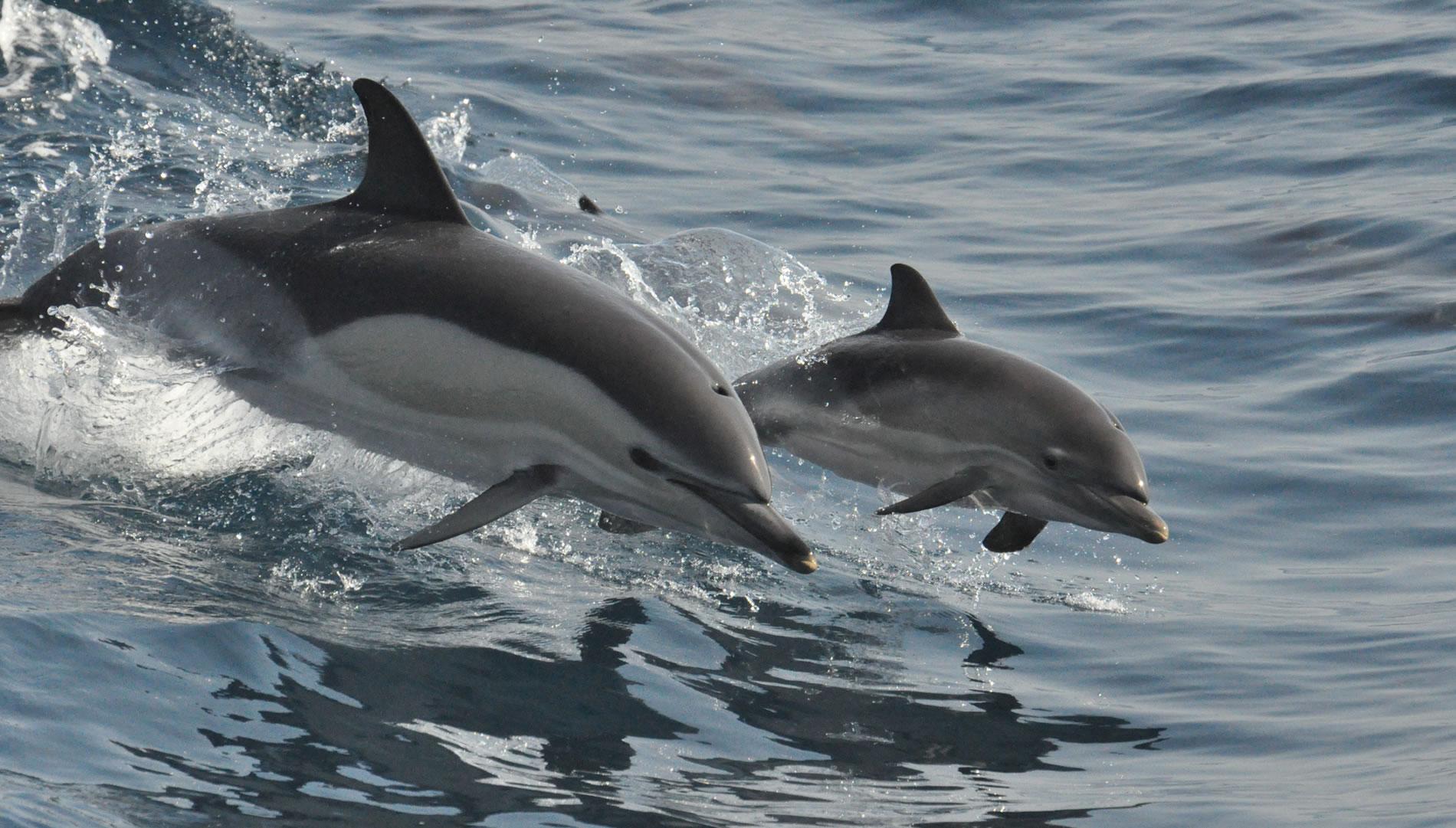 Slide-Dolphins