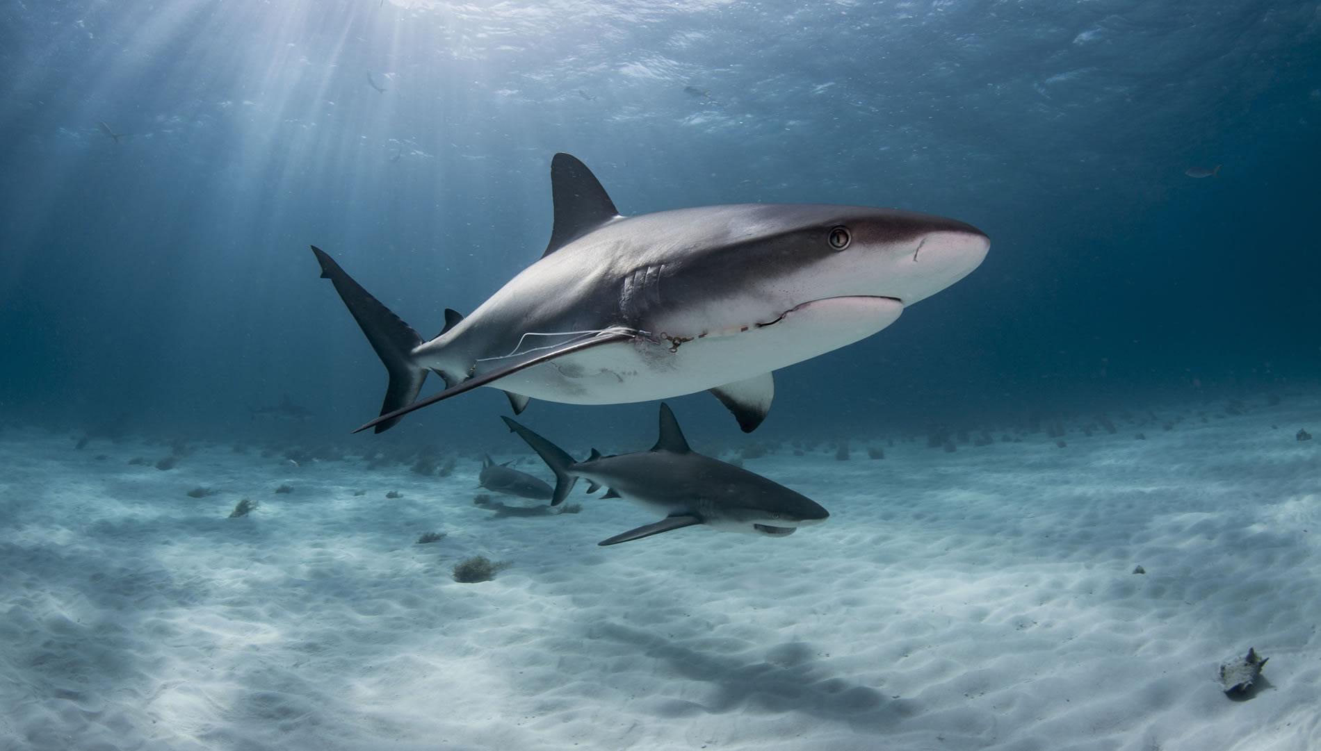 Slide-Shark