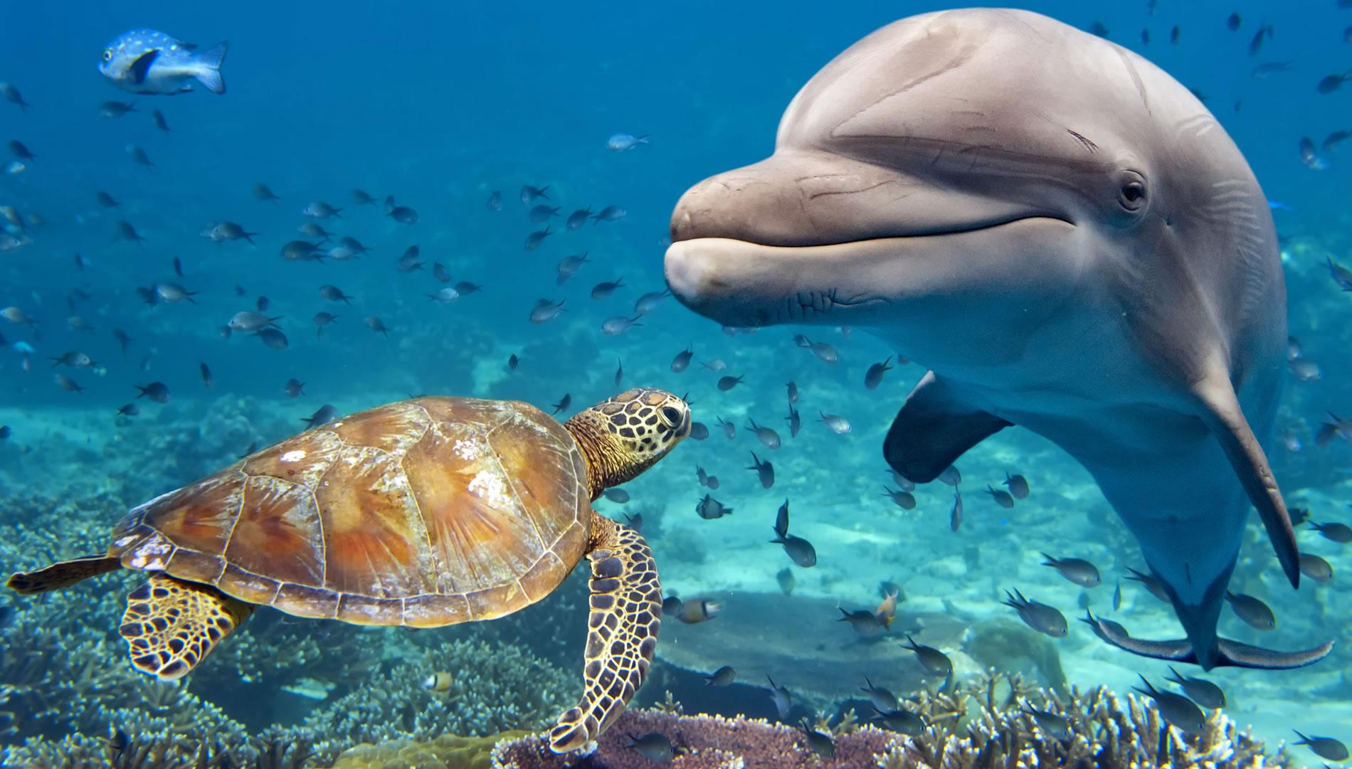 Slide-Turtle