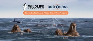 Wiildlife and Astrocast