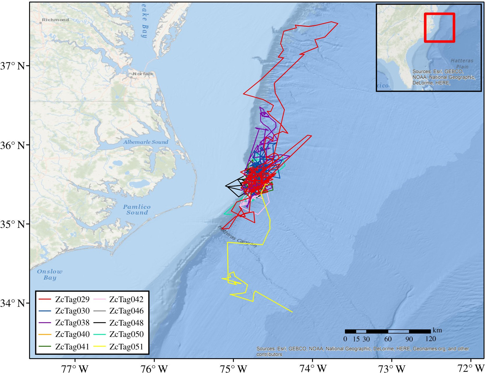 Diving behavior of Cuvier's beaked whales off Cape Hatteras, NC