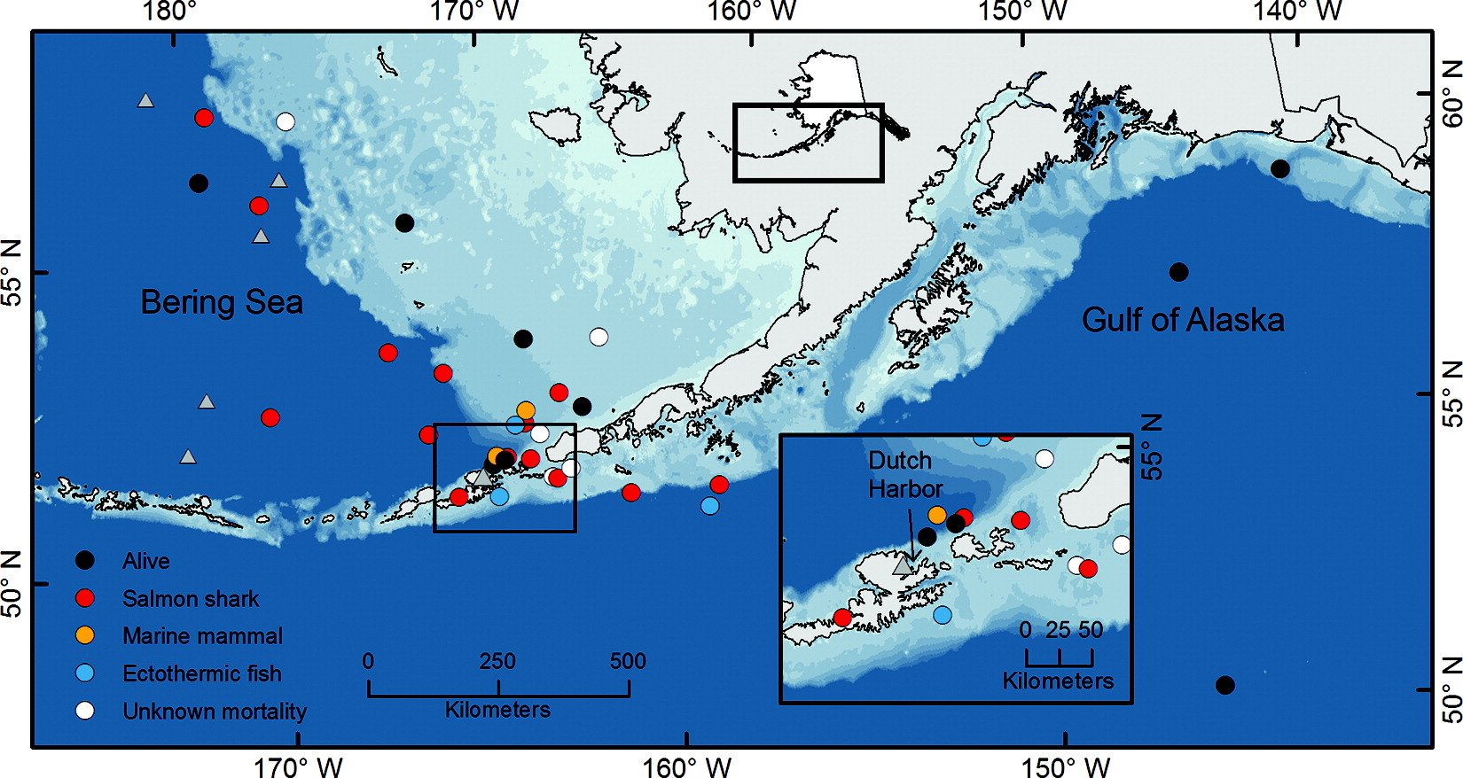 Pop-up satellite archival tags reveal evidence of intense predation on large immature Chinook salmon in the North Pacific Ocean
